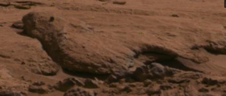 bild-vom-mars-mit-1300-megapixel-vogel