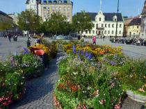 schweden-malmoe-impressions-blumen